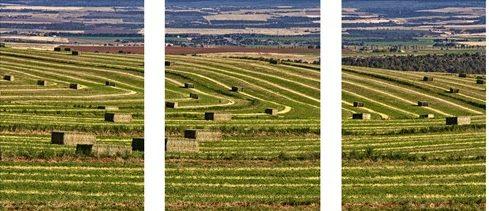 cropped-harvest-ii.jpg
