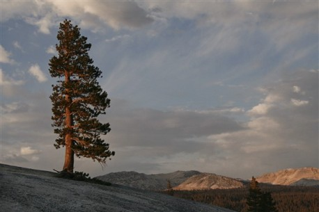 Sunset illuminates a lone pine on Pot Hole Dome in Yosemite National Park.