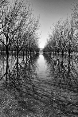 Near Garfield, NM, the springtime flood irrigation of the groves promises pecans.