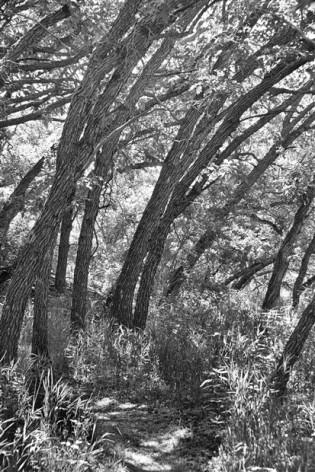 A hike at Sugarite State Park