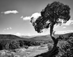 Gunnison Tree